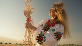 Schönheits-Ansicht-Weizen-Spitzen gesprungen durch die roten Bänder, die mitten in Weizen-Feld stehen stock video footage