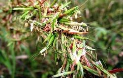 Schönheits-Grasbeschaffenheit der Natur abstrakte Stockfoto