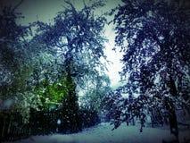 Schönheits-Schnee lizenzfreies stockfoto