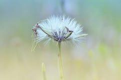 Schönheits-volle Blume Stockbild