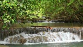 Schönheits-Wasserfall im tiefen Wald stock footage