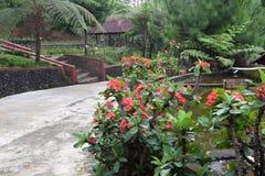 Schönheitsbauernhof im Hügel Bandung Indonesien stockfoto