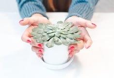 Schönheitsbehandlungsfoto von netten manikürten Frauenfingernägeln stockbild