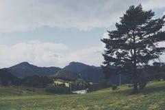 Schönheitsberge und großer Baum lizenzfreies stockfoto