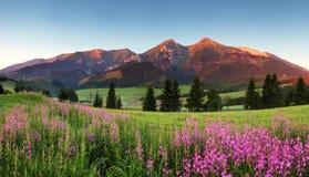 Schönheitsbergpanorama mit Blumen - Slowakei Stockfotografie