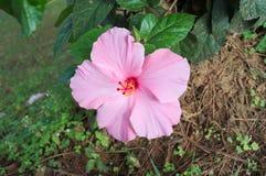 Schönheitsblüte der Naturblume mit Blatt im Garten Lizenzfreie Stockfotos