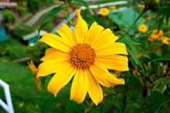 Schönheitsblüte der Naturblume mit Blatt im Garten Stockfotografie