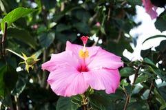Schönheitsblüte der Naturblume mit Blatt im Garten Lizenzfreies Stockbild