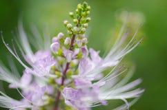 Schönheitsblume Stockfotos