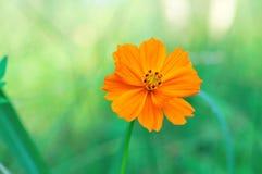 Schönheitsblume Lizenzfreies Stockbild