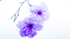 Schönheitsblumenkünste stockfotografie