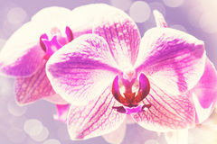 Schönheitsfrühlingshintergründe mit rosa Orchidee Stockbild
