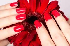 Schönheitshände mit roter Modemaniküre und heller Blume Schöne manikürte Rotpolitur auf Nägeln Stockfotos
