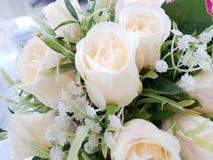 Schönheitsnatur weißer Blume Rose Stockbilder