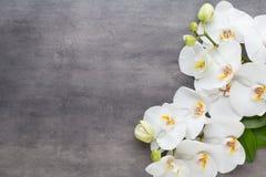 Schönheitsorchidee auf einem grauen Hintergrund Bad und entspannende Felder stockfotos