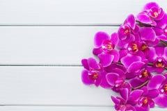 Schönheitsorchidee auf einem grauen Hintergrund Bad und entspannende Felder lizenzfreies stockbild