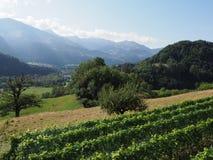 Schönheitspanorama mit Alpen an Europäer Gruyeres-Stadt in der Schweiz im August stockfotografie