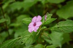 Schönheitspurpurblume Stockfotografie