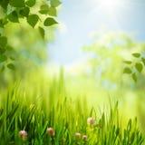 Schönheitssommertag im Wald lizenzfreies stockbild
