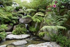Schönheitssteingras und transparen Wasser im Fluss stockfoto