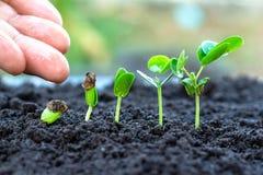 Schössling, der vom Boden wächst stockfotos
