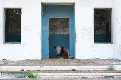 Schüchtern Sie das Schauen durch einen Eingang des alten Hauses ein lizenzfreie stockfotografie