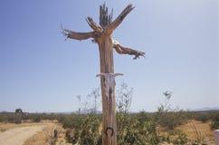Schüchtern Sie Schädel nahe trockener Bergschlucht, Tuscon, AZ ein stockbilder
