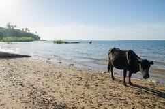 Schüchtern Sie Stellung auf tropischem Strand von Insel Bubaque, Bijagos-Inseln, Guinea-Bissau, Afrika ein lizenzfreies stockbild