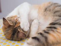 Schüchterne Katze auf Bett Lizenzfreies Stockfoto