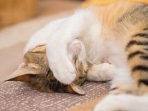 Schüchterne Katze auf Bett Lizenzfreie Stockfotografie
