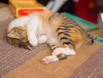 Schüchterne Katze auf Bett Stockfotos