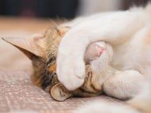 Schüchterne Katze auf Bett Lizenzfreie Stockfotos