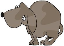 Schüchterner Hund Stockfoto
