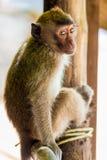 Schüchterner schöner kleiner Affe Stockfoto