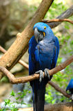 Schüchterner Vogel Lizenzfreies Stockbild
