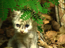 Schüchternes Kätzchen Stockfoto