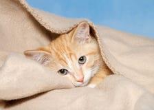Schüchternes müdes orange Kätzchen der getigerten Katze in einer Decke Stockfotografie