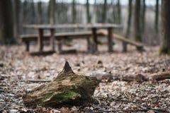 Schüsse des Stumpfs im Vordergrund und des Holztischs mit Bänke auf dem Hintergrund Stockfoto