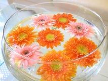 Schüssel Blumen stockbilder