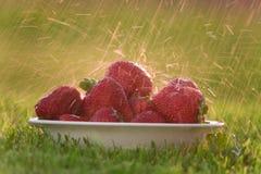 Schüssel Erdbeeren im Regen Stockfoto