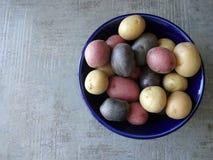 Schüssel mehrfarbige Kartoffeln Lizenzfreie Stockbilder