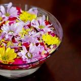 Schüssel mit Chrysanthemeblumen Stockfotografie