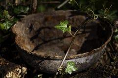 Schüssel mit dem Rost von Natur aus umgeben Lizenzfreies Stockfoto