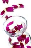 Schüssel mit purpurroter Blume stockfoto
