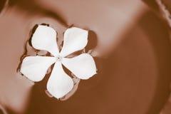 Schüssel Schokolade mit weißer Blume in ihr stockfotografie