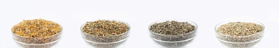 Schüsseln mit Teeanlagen Stockfotografie