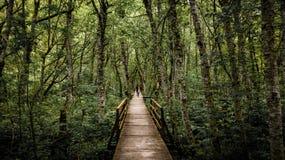 Schützen Sie die Natur, grün! stockbild
