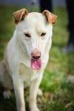Schützen Sie Hund Stockbilder