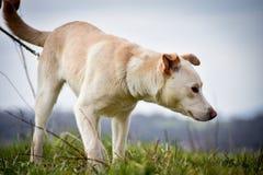 Schützen Sie Hund Stockfotografie