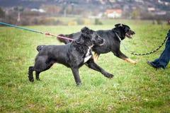 Schützen Sie Hund Stockbild